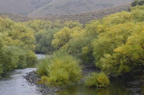 119x rio atreuco